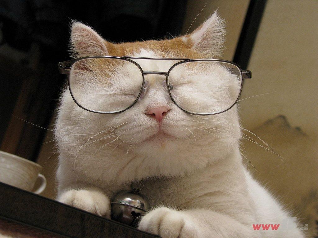 可爱猫咪看书睡觉图片
